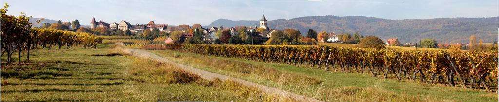 Panorama Vignes Colmar Capitale des Vins Alsace